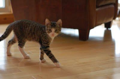 KittiesHandstands024